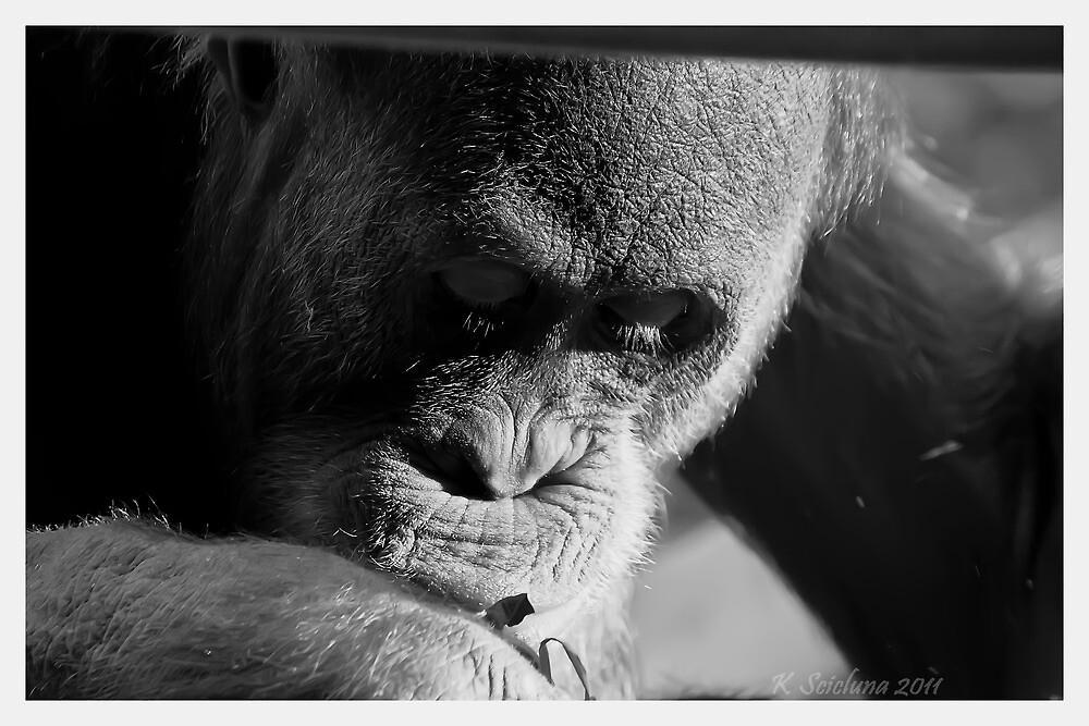 A pensive look by bluetaipan