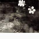 Vietnam ~ Blossoms by Yves Schiepek