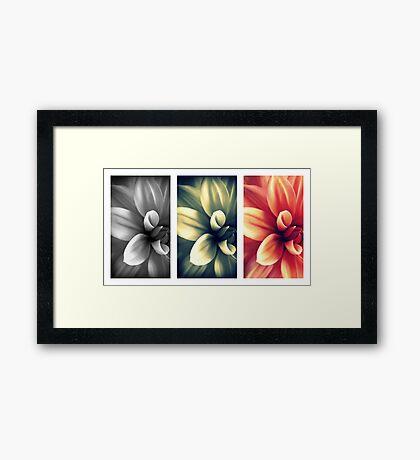 Dahlia - Triptych Framed Print