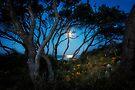 Moonrise, Emerald Beach NSW, Australia by Normf