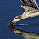 Early Morning Skimmer by Kathy Baccari