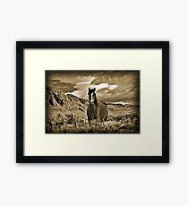 Solo Wild Horse Framed Print