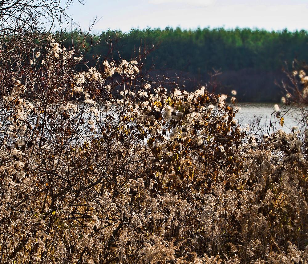 Autumn Seeding by Jo-Anne Gazo-McKim