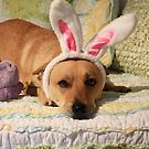 Happy Easter! by Olivia Plasencia