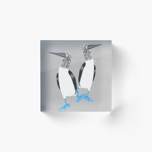 Blue-footed booby Acrylic Block