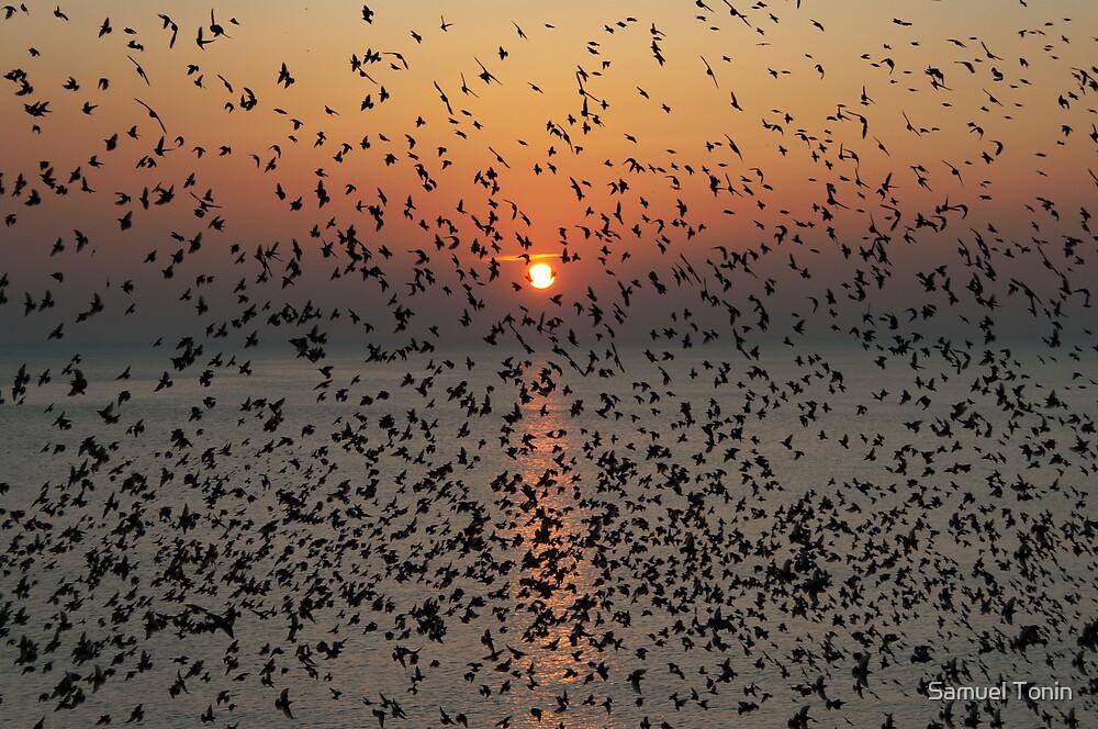 The flight of music by Samuel Tonin