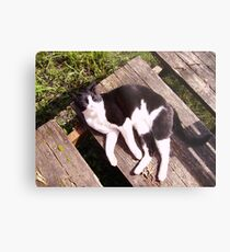 Board on a Sunny Day Metal Print