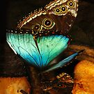 Two sides of Blue Morpho butterfly by Shienna