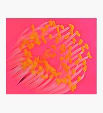 Macro Camellia Photographic Print