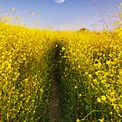 Moonrise over Yellow by Flux Photography
