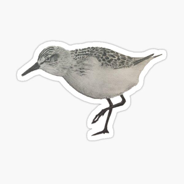 Sanderling - small bird Sticker