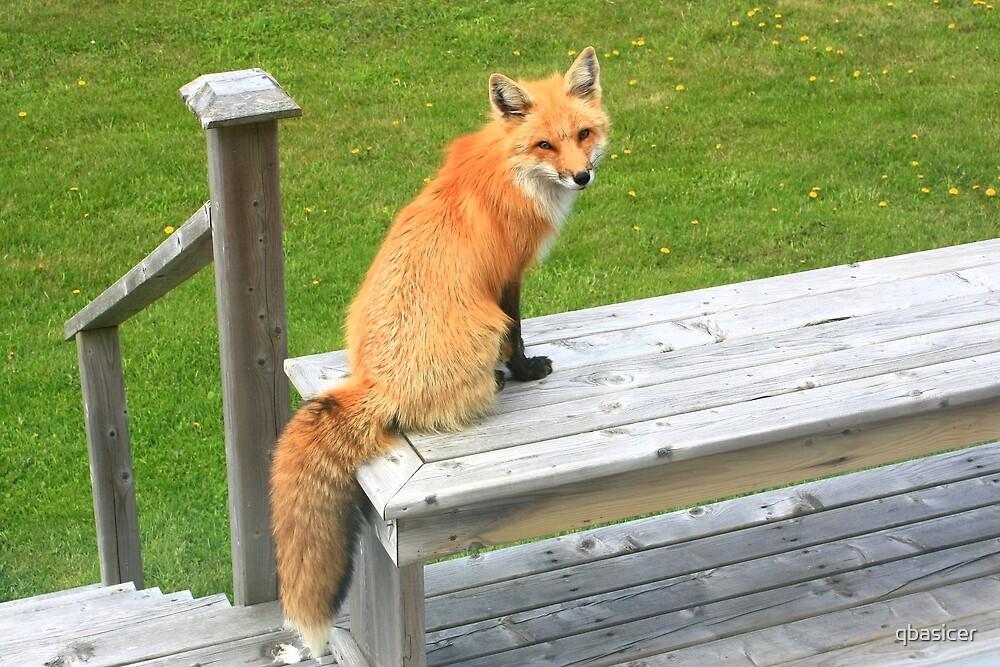 The Fantastic Mr Fox! by qbasicer
