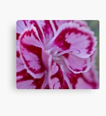 Two tone flower  Canvas Print