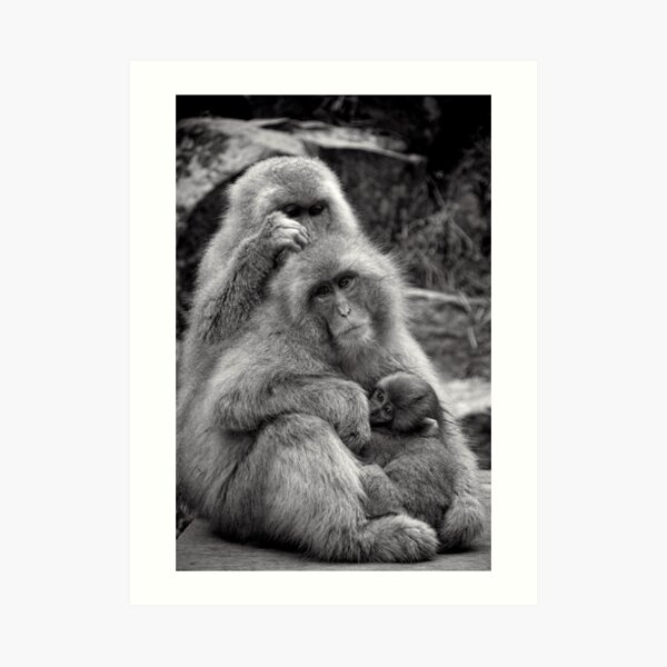 Work, play and stay together. Snow Monkeys Art Print