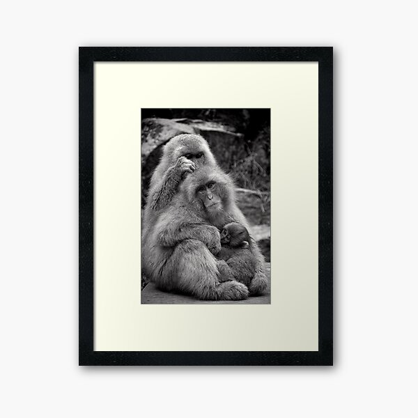 Work, play and stay together. Snow Monkeys Framed Art Print