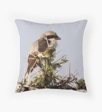 Grey-backed Fiscal Throw Pillow