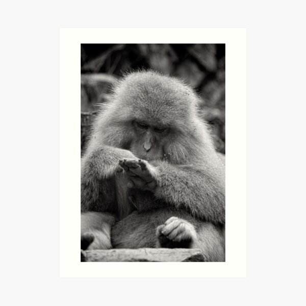 I think I need a manicure. Snow Monkeys Art Print