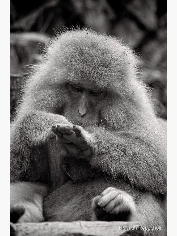 I think I need a manicure. Snow Monkeys by keystone