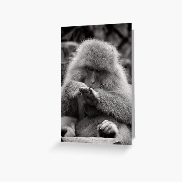 I think I need a manicure. Snow Monkeys Greeting Card
