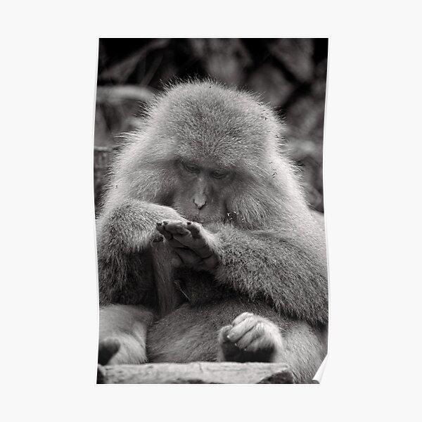 I think I need a manicure. Snow Monkeys Poster