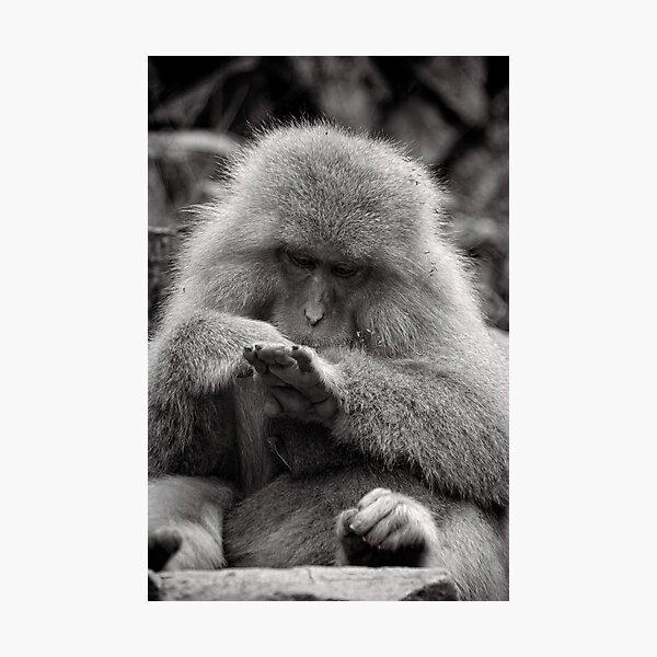 I think I need a manicure. Snow Monkeys Photographic Print