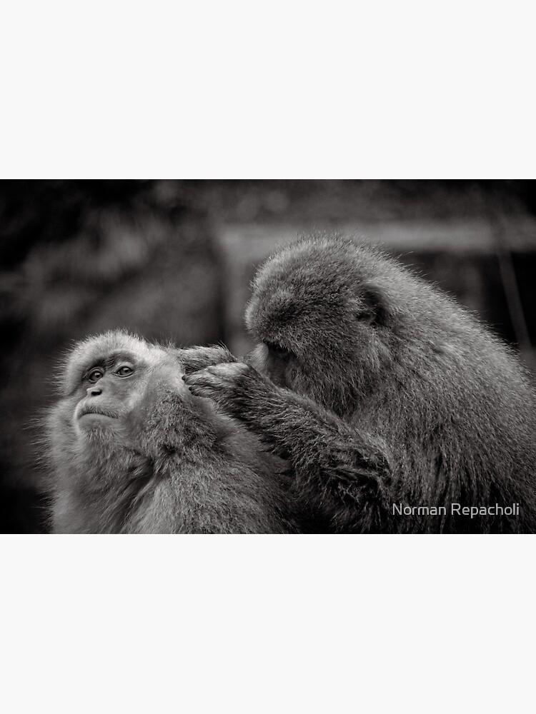 Five more fleas...err, I mean minutes! Snow Monkeys by keystone