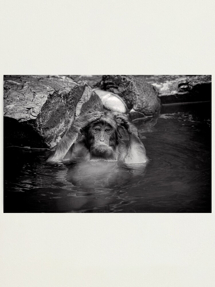 Alternate view of Rinse and Repeat. Snow Monkeys Photographic Print