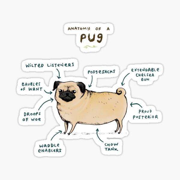 Anatomy of a Pug Sticker