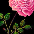 Large Rose in the French Style by luvapples downunder/ Norval Arbogast