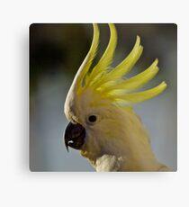 Australian Sulphur Crested Cockatoo #4. Metal Print