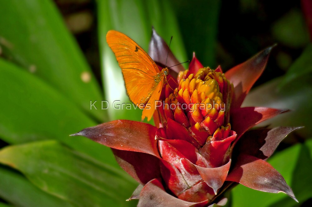 Tropical Bromeliad With Butterfly by K D Graves Photography