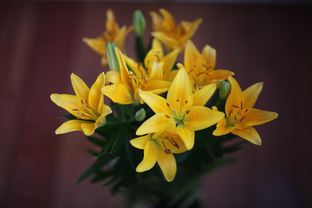 lily flowers on a black background  by mrivserg