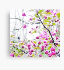Rosa Blüten Leinwanddruck