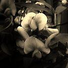 Wanton Blooming by Miku Jules Boris Smeets