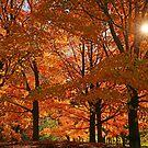 Fall sunrise!! by jozi1