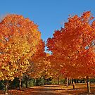 A fall spectacular of colors!! by Anthony Goldman