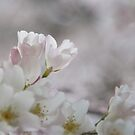 The Glory of Spring 3 von Peter O'Hara