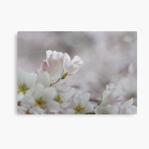 The Glory of Spring 3 Metal Print