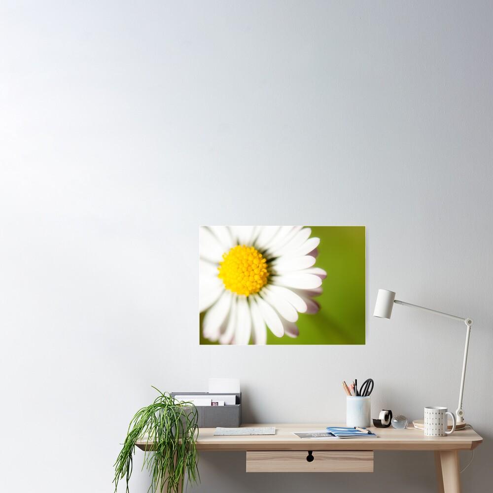 Spring Daisy Poster