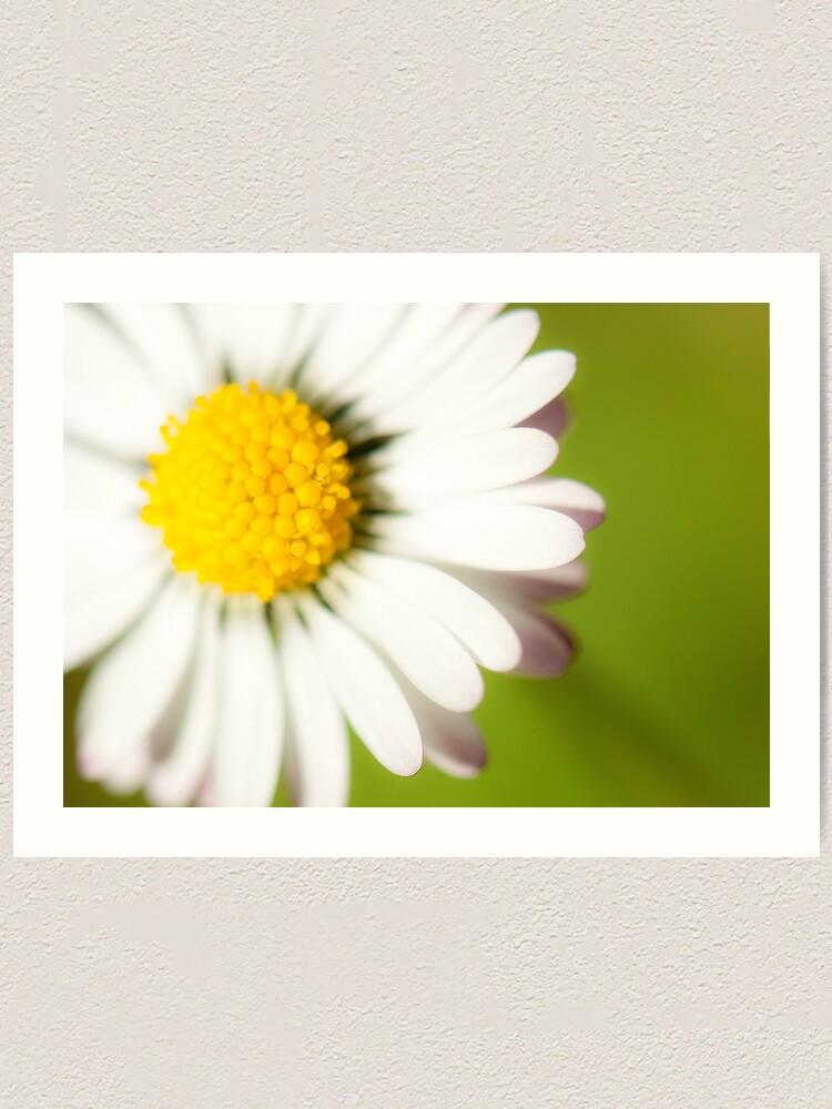 Alternate view of Spring Daisy Art Print