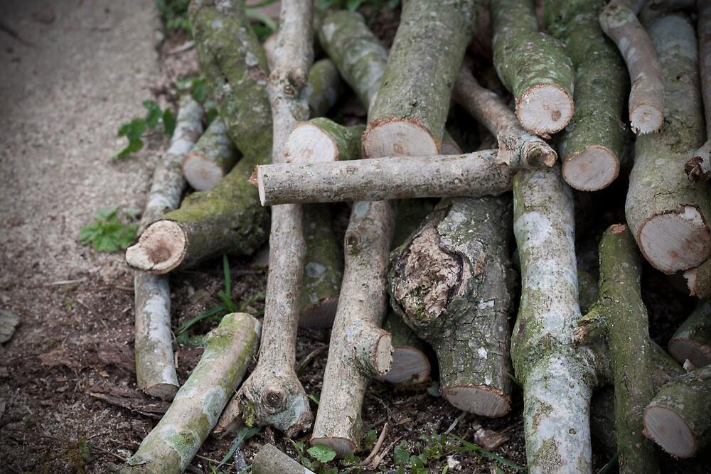 Wood Pile by Sam Denning