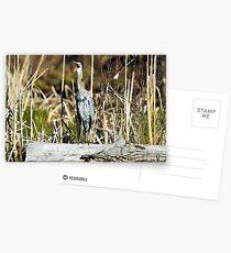 "Great Blue ""awk!"" Heron Greeting Card"