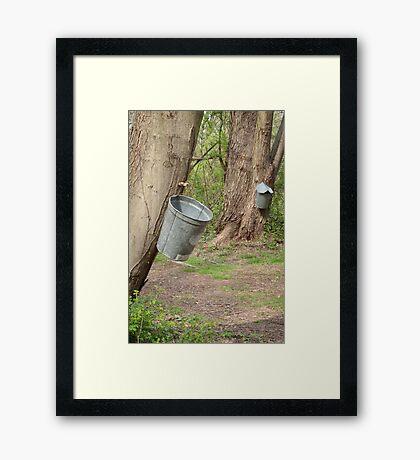 The Sap Catchers Framed Print