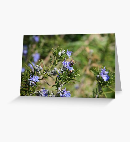 Beeing There - Rosemary Greeting Card