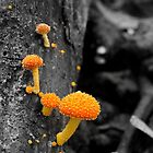 Nuggets on the forest floor by Chris Allen