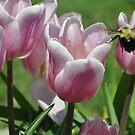 Bee Still by Butterfly2008