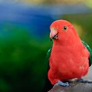 King Parrot by Dilshara Hill