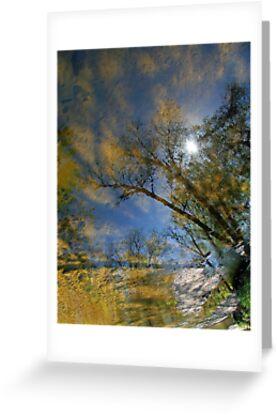 Creek Reflections by Cora Wandel