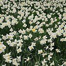 Field by jon  daly