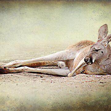 napping by hartpix